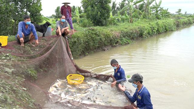 Gia đình ông Lê Hồng Đào thuê nhân công kéo cá để cung cấp cho người dân địa phương